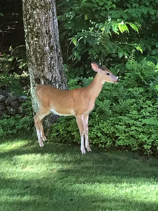Deer kids and teen-5.jpg