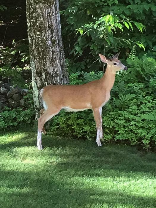 Deer kids and teen-6.jpg