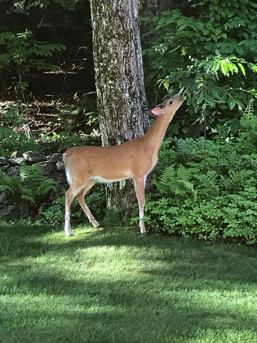 Deer kids and teen-1.jpg
