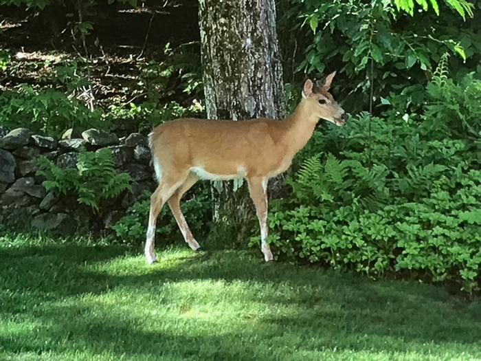 Deer kids and teen-3.jpg