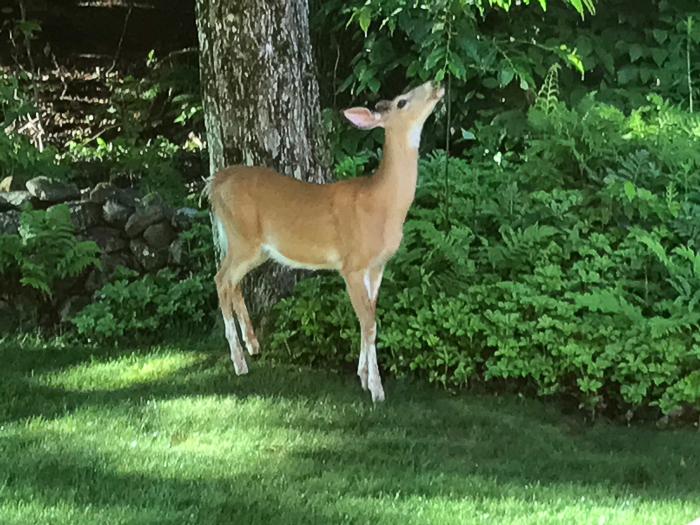 Deer kids and teen-4.jpg