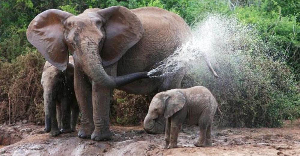 Elephants.01.jpg