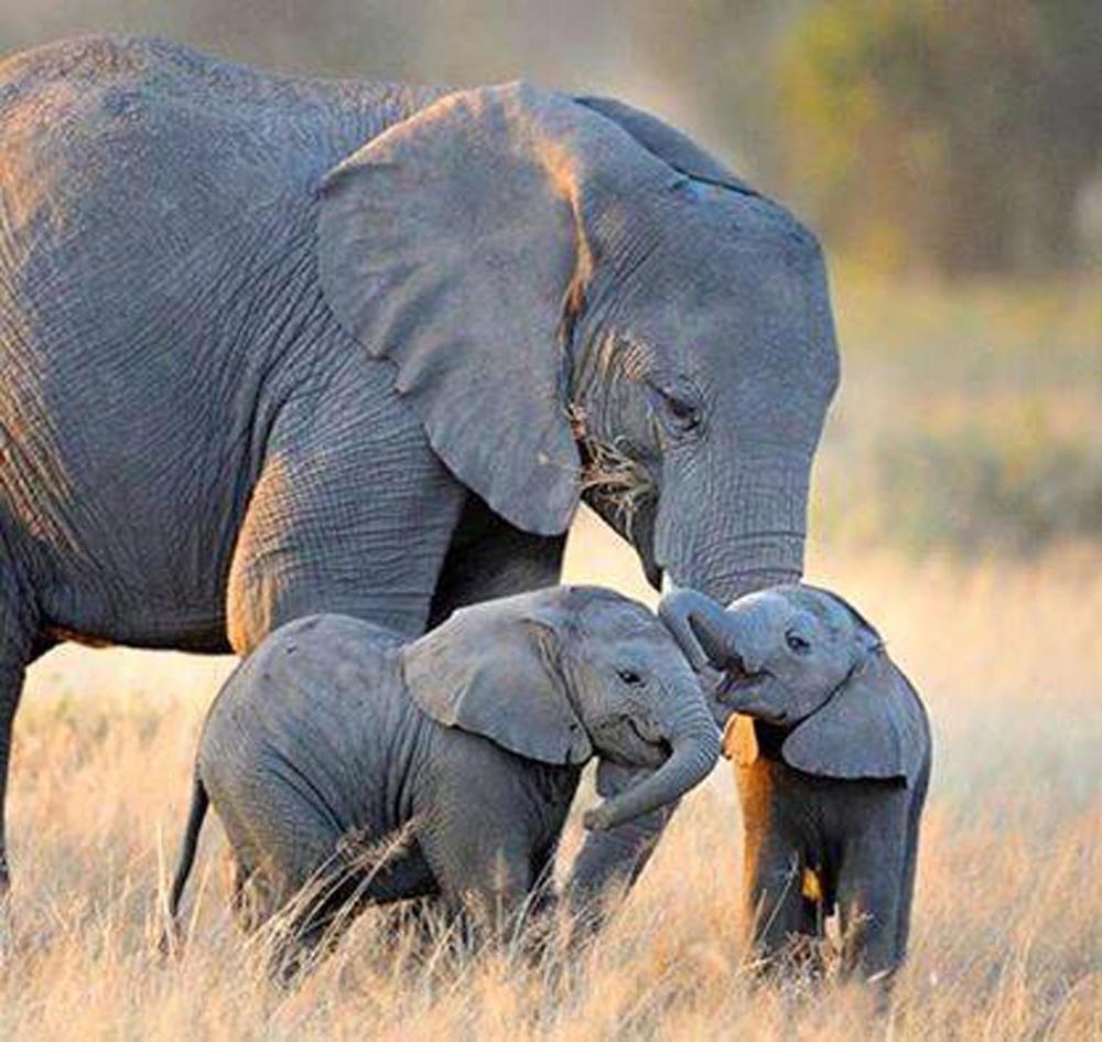 Elephants.02.jpg