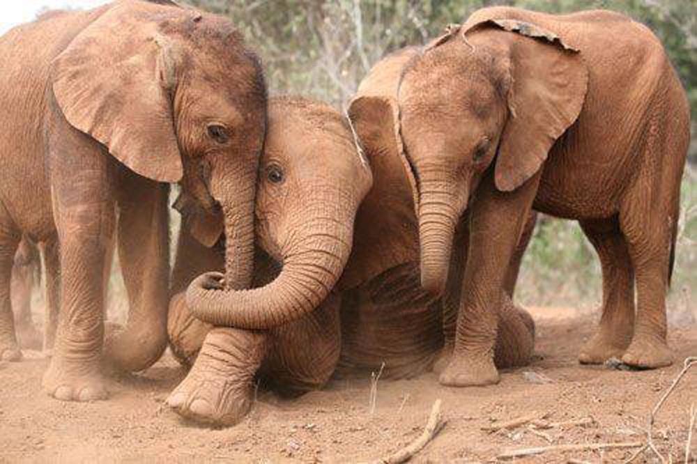 Elephants.03.jpg