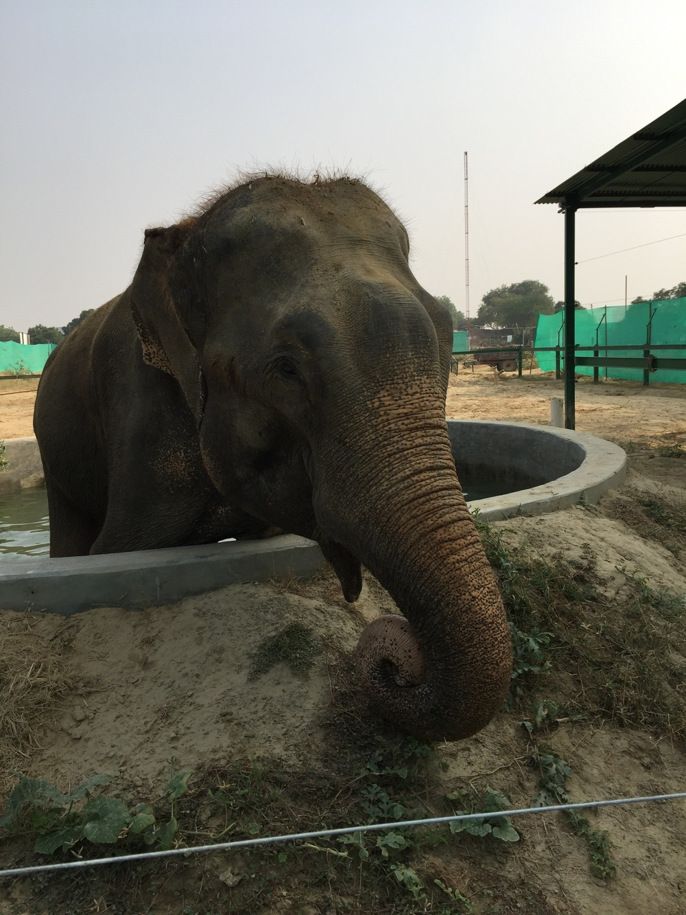 Raju in his daily therapy tub.