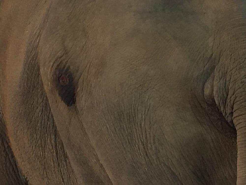 Raju's tearful eye.