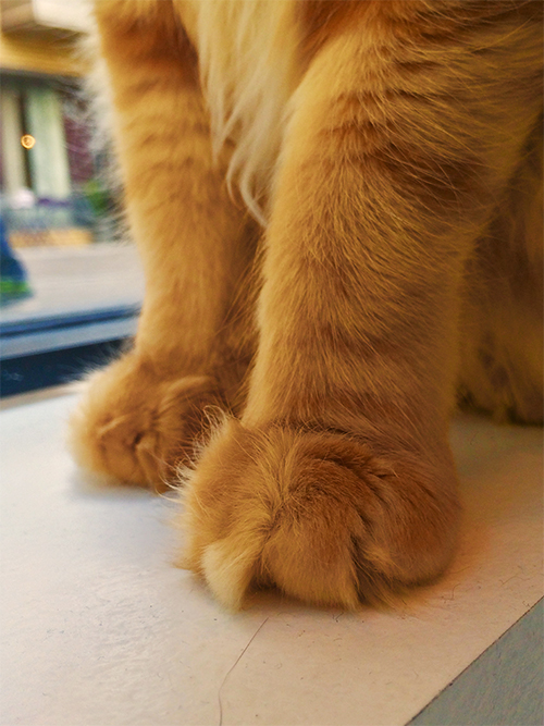 The fluff filled paws of Aslan the cat .