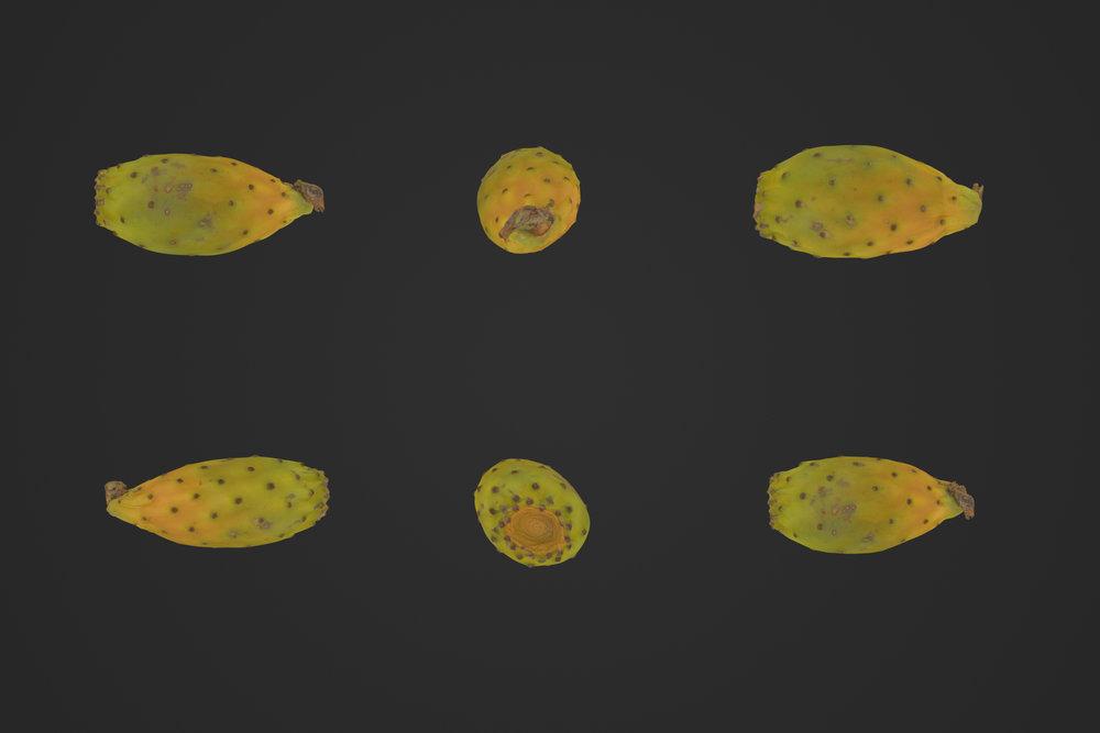 Prickly_Pear_1_1.jpg