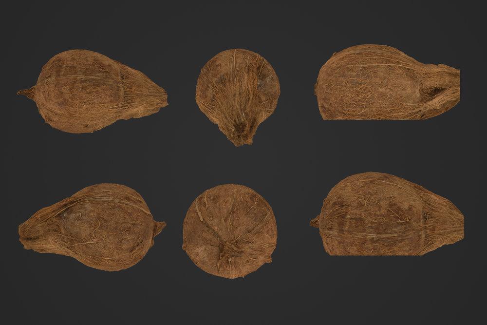 Coconut_1_1.jpg