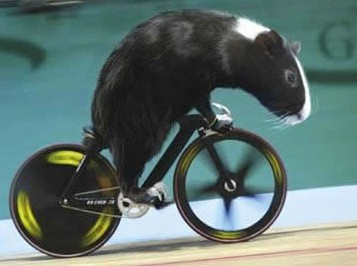 Small bike, or big Guinea Pig?