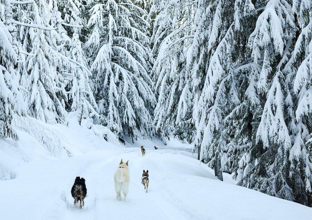 dogs+in+snow+2.jpg