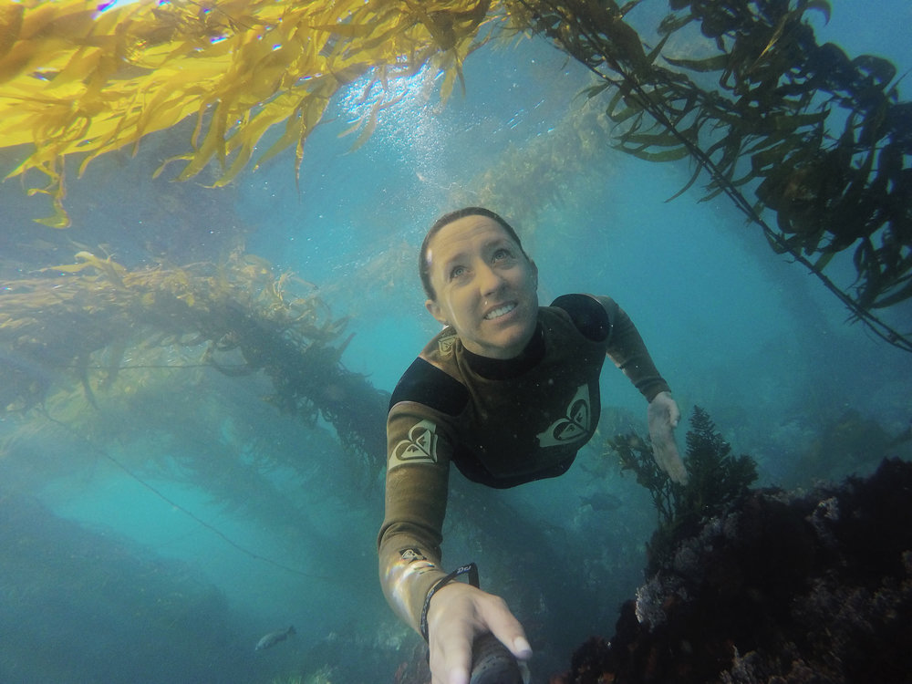 Free diving in the kelp forest of Monterey Bay