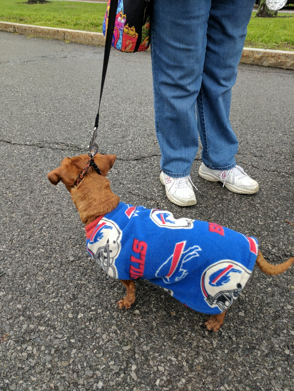 Close up of Buffalo Bills poncho