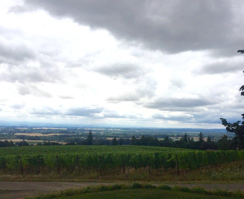 vineyard views