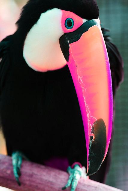neon toucan