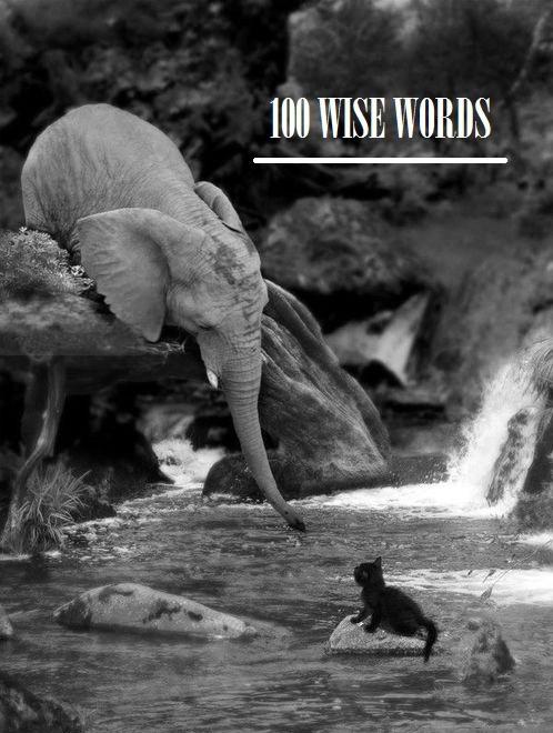 Wise Words // elephant & kitten