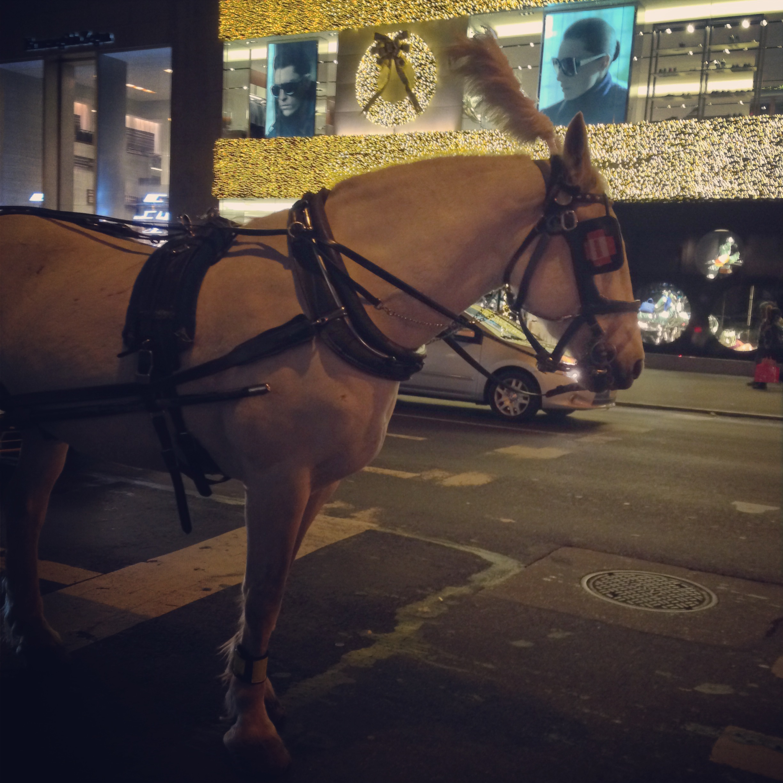 horse drawn carriage NYC Dec 2013