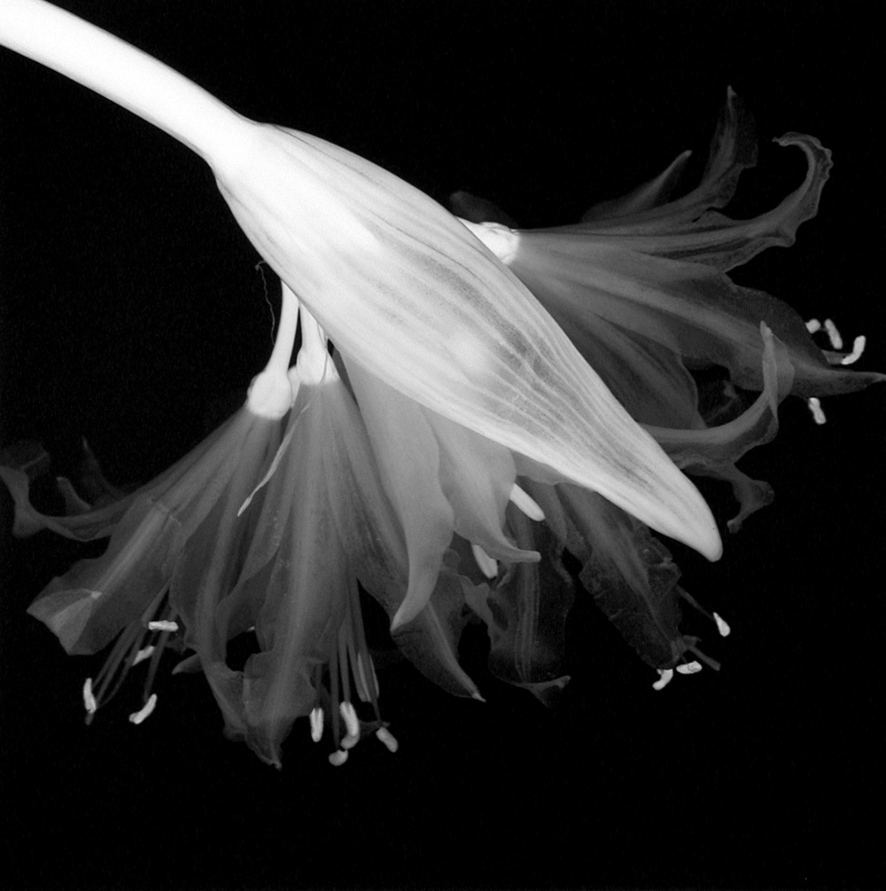 Flower (Number 17), 1996