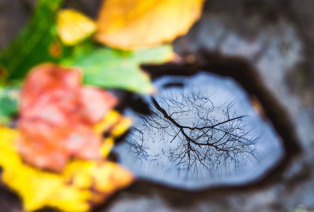 Fall 2017Low-6.jpg
