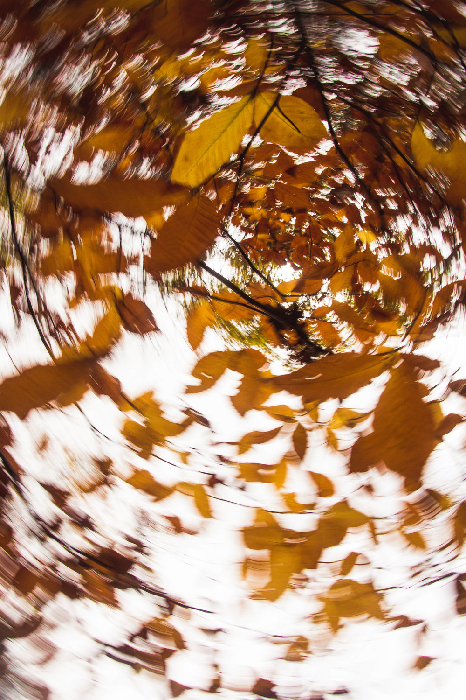 Fall 2017Low-25.jpg