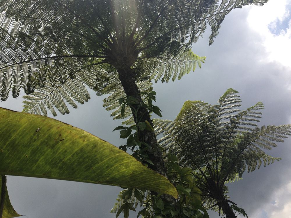 Biyahan, Bali, Indonésie  Novembre 2015