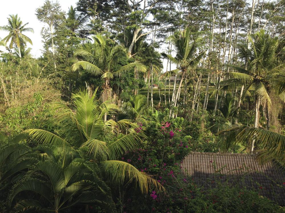 Ubud, Bali, Indonésie  Novembre 2015