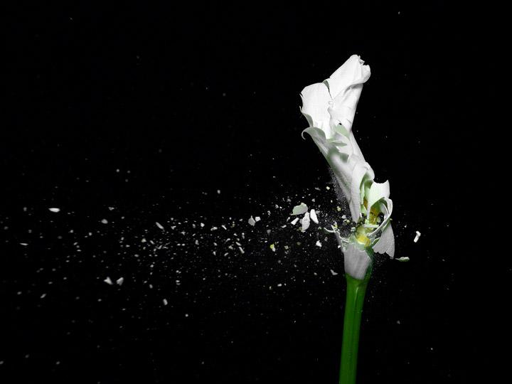 070821az_flower_explode00141.jpg