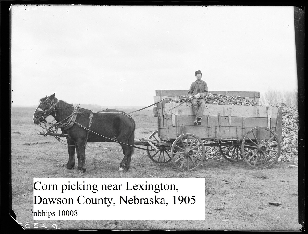 Butcher, Dawson county, Lexington, corn picking.jpg