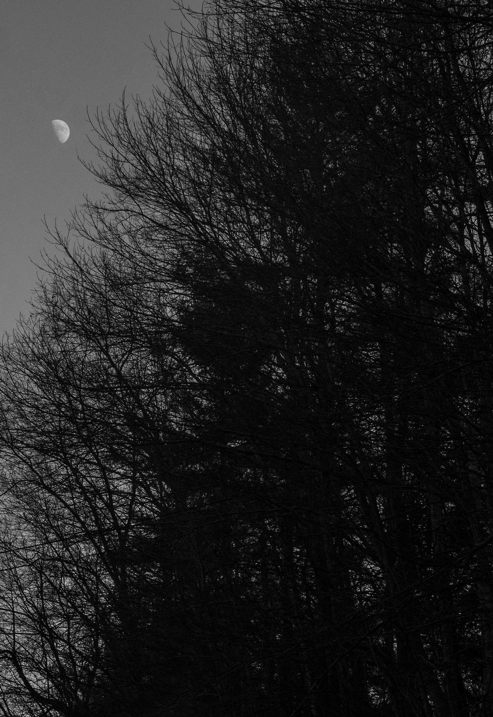 The moon flickers through the trees on the road between Red Onion State Prison and Wallens Ridge State Prison. The supermax prisons sit 31 miles apart near the heart of Appalachia coal country.