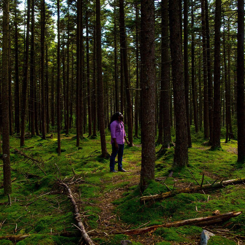 rayredspruce.jpg