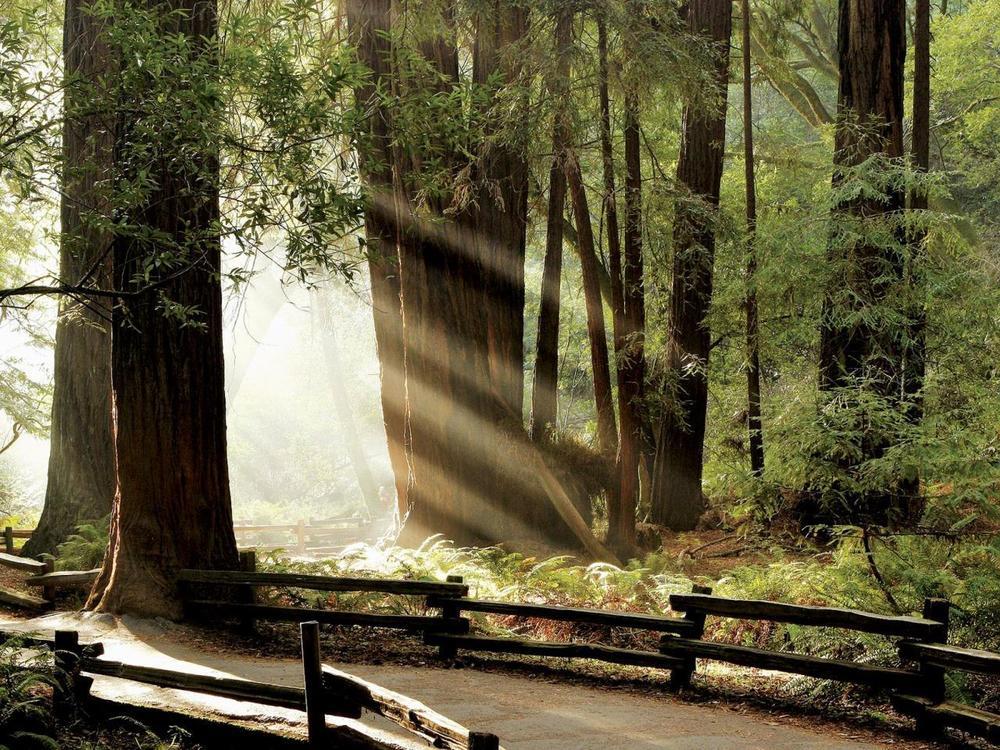 Redwood Trees_Virtuoso.jpg