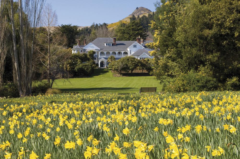 House-Daffodils-High.jpg