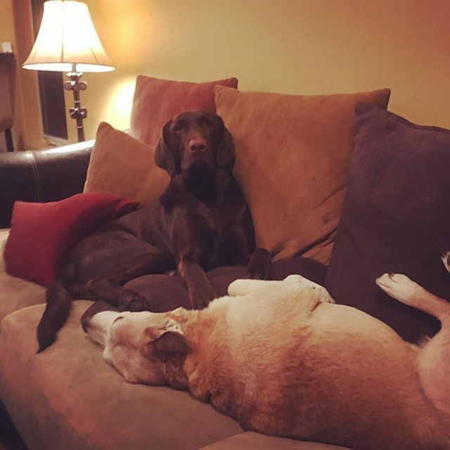 These two finally made up and this is how they rang in the new year... #dogcousins #HappySnoozeYear