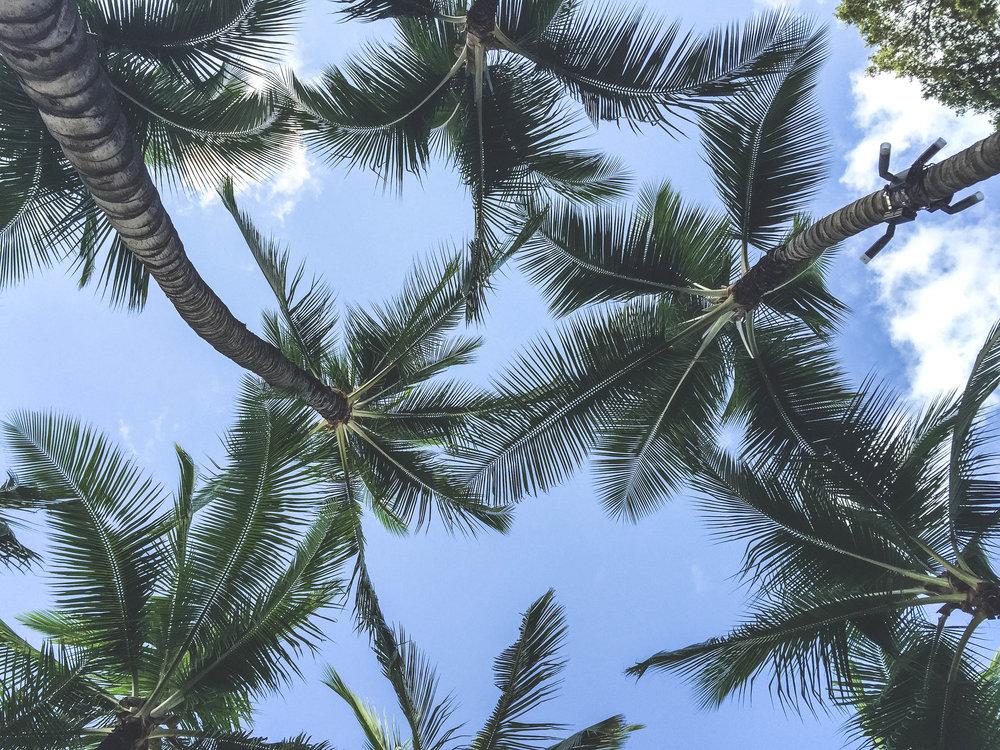 hawaiiwithmahalo-122.jpg