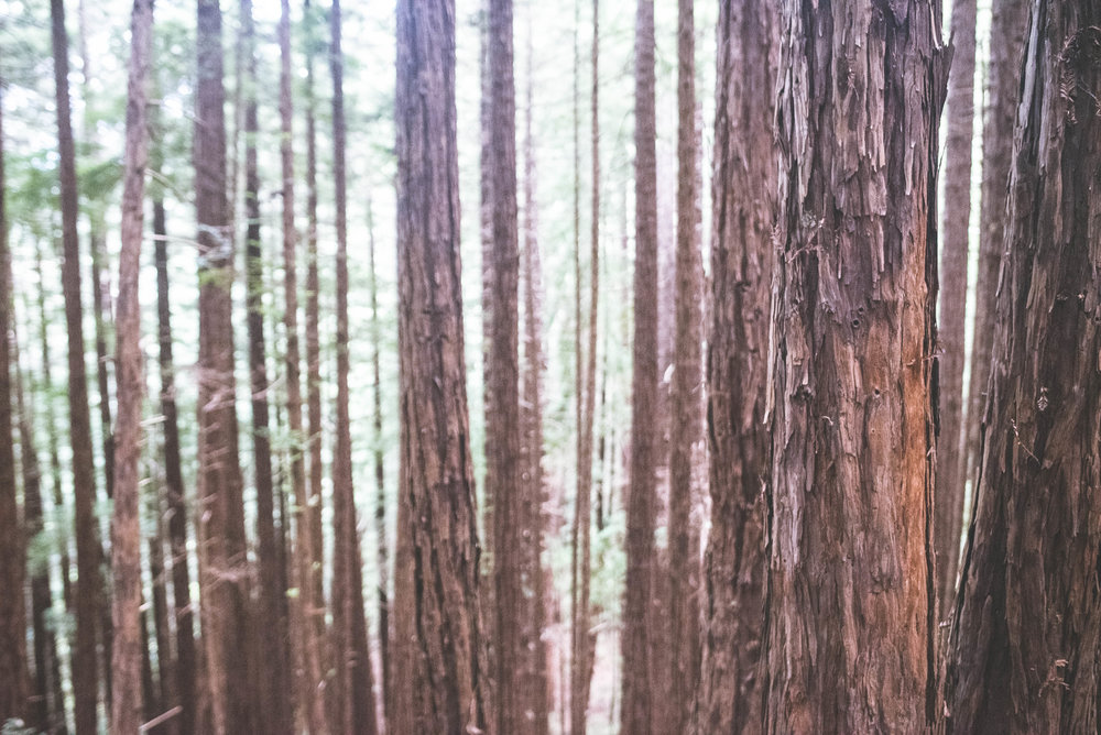 muirwoods-26.jpg