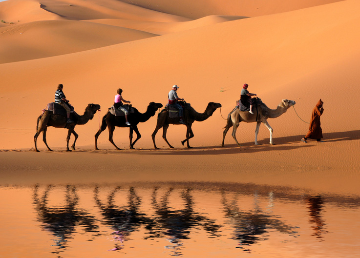 camels_sahara_morocco.jpg