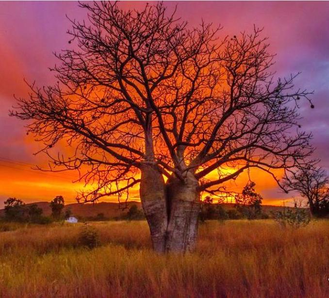 Sunset Kununurra.jpg