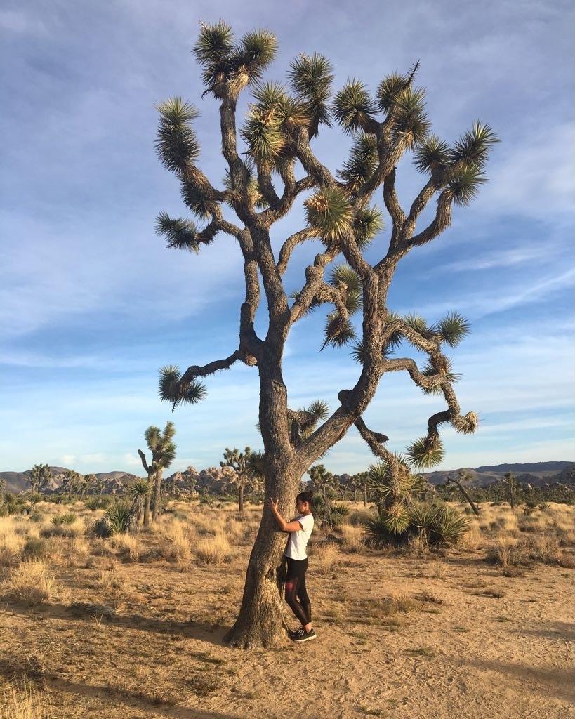 Joshua Tree National Park by Alison Beckner