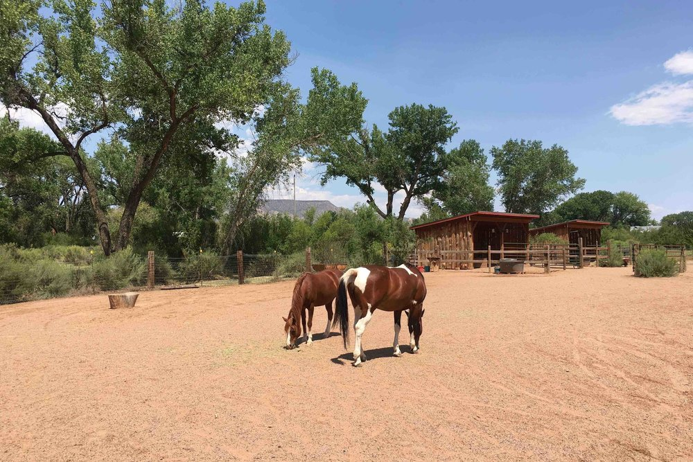 Healing Through Horses NM by Alison Beckner.jpg