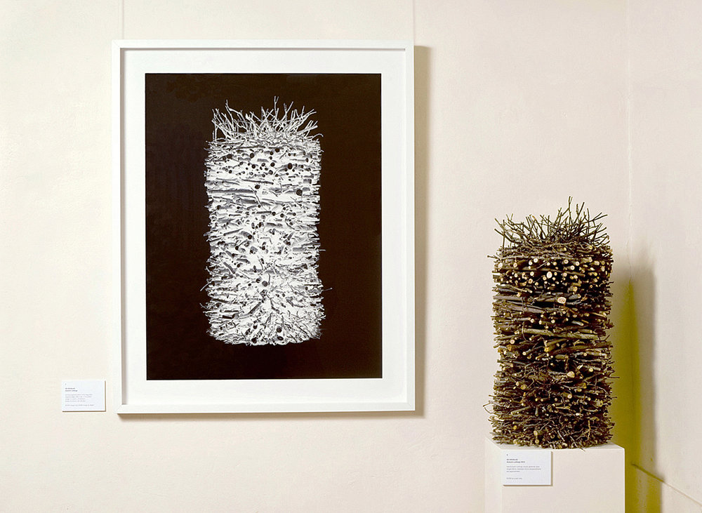 Object Studies    Autumn Cuttings  2015 gallery installation view, framed image: 132cm x 107cm object: 84cm x 41cm