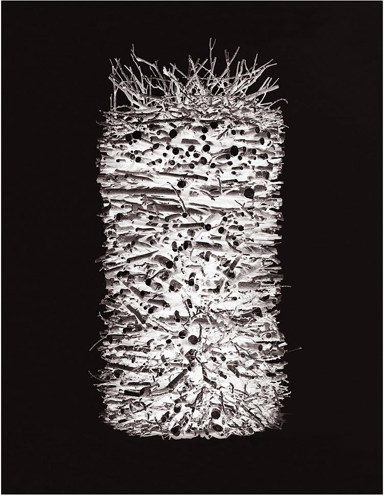 Object Studies    Autumn Cuttings  2015 110cm x 85cm