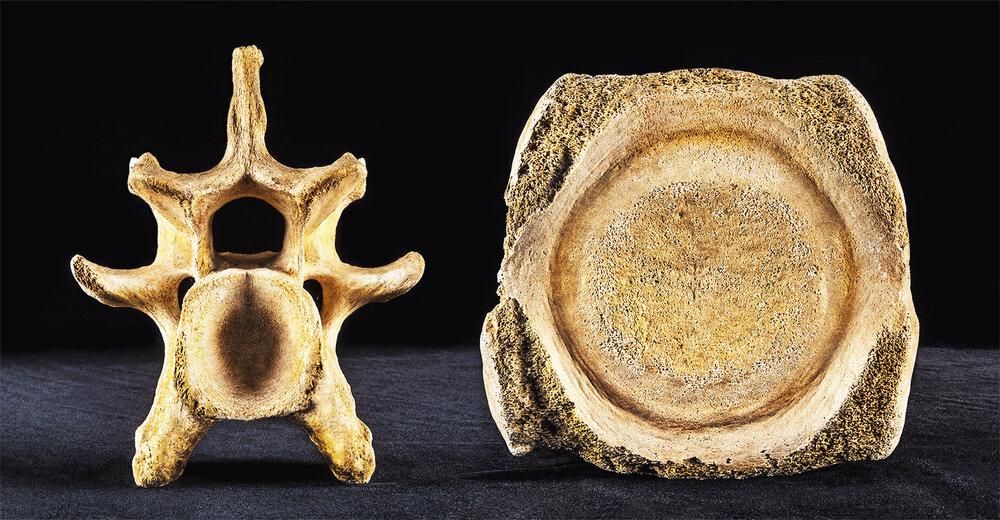 Duologues    Vertebrae  2018  (found objects: land & sea) 36cm x 76.5cm