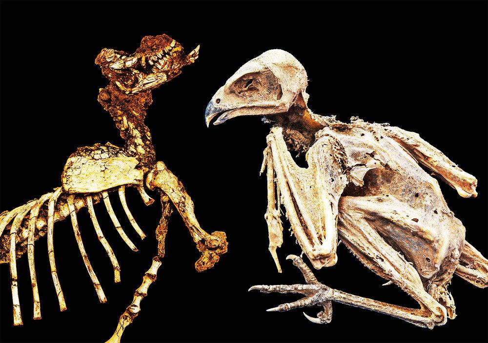 Duologues    A Fossil & A Mummy  2019 (Megafauna kangaroo & a mummified bird, Flinders University Palaeontology Department, Bedford Park, SA) 36cm x 51cm
