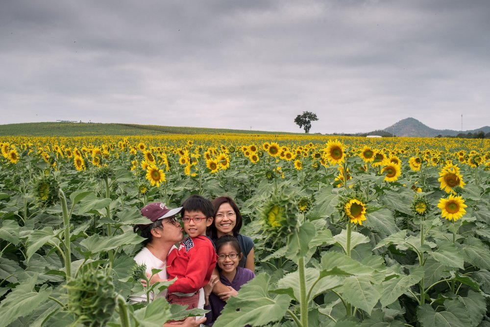 Our last stop before Bangkok. The sunflower field. Visually quite a sight, it makes for a good backdrop for photos.