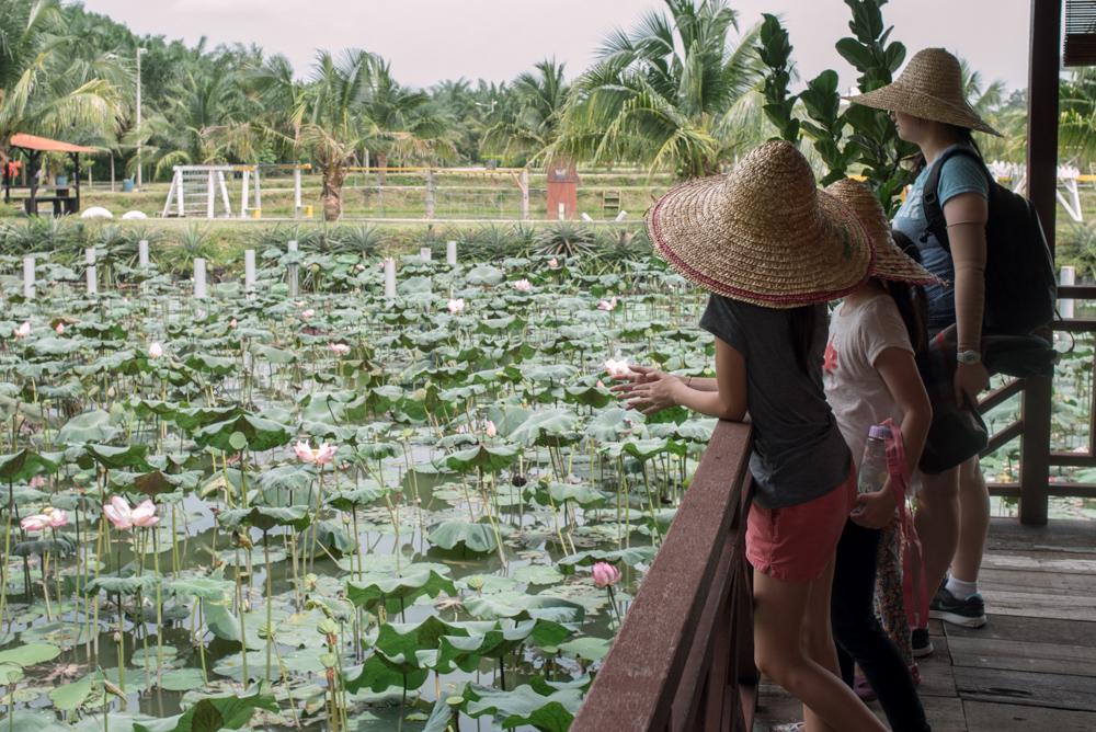 kulai_durian_guesthouse_14