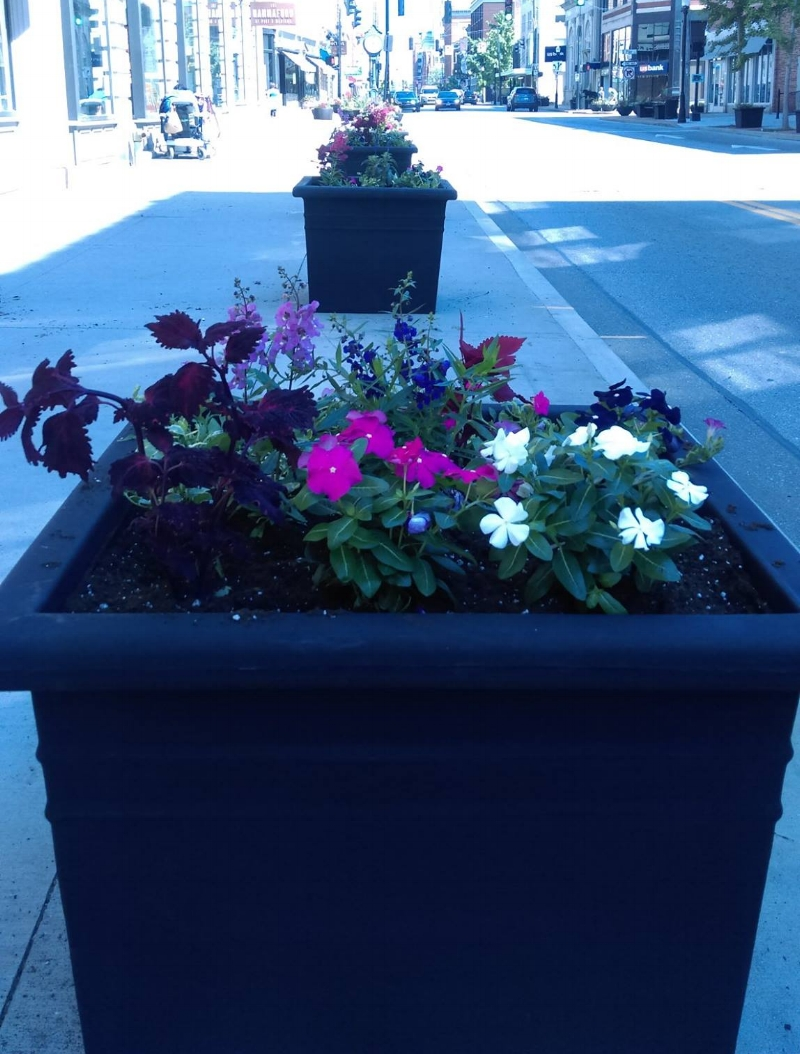 Planters on Madison Ave.