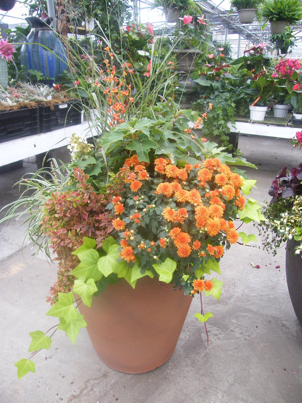 An example of a fall flowering pot you can get delivered to your home.