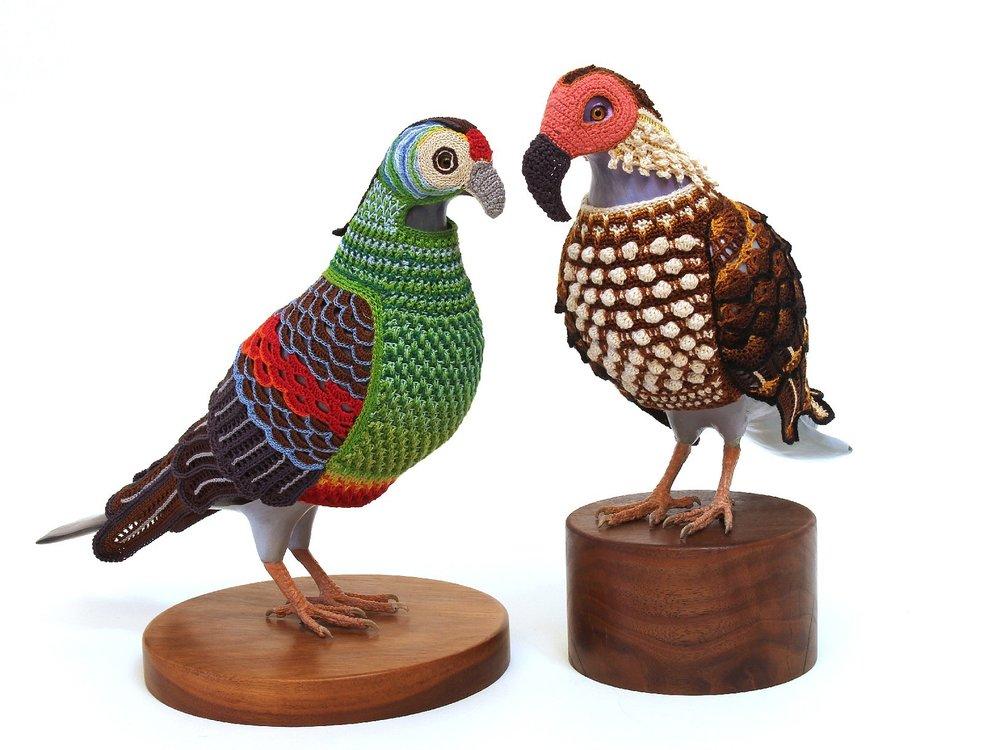 pigeon-6.jpg