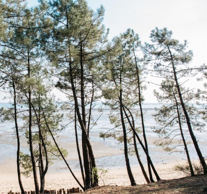 pines.jpeg