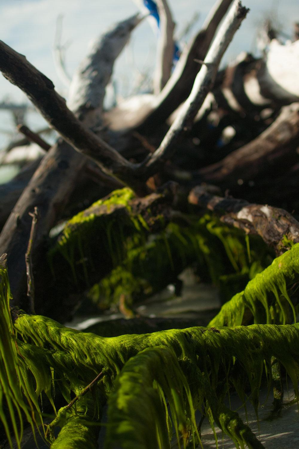 seaweed edit-7923.jpg